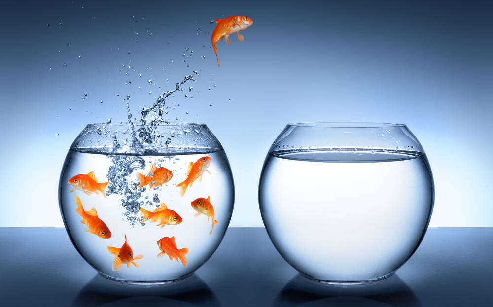 En guldfisk på väg att hoppa från en glasskål till en annan